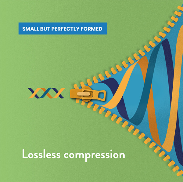 Zipping up a DNA helix to show lossless compression
